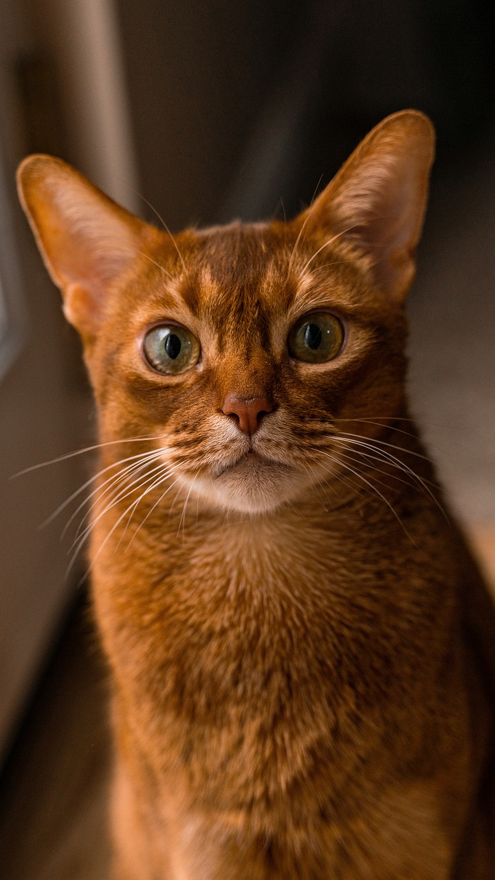 10 Cutest cat breeds perfect for adoption in 2021. https://petspalo.com/