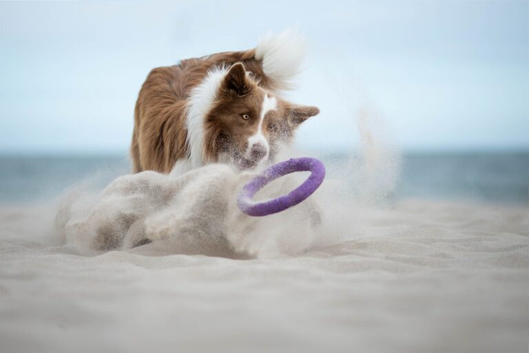 Border Collie Dog breeds - Complete Profile, History, and Care. https://petspalo.com