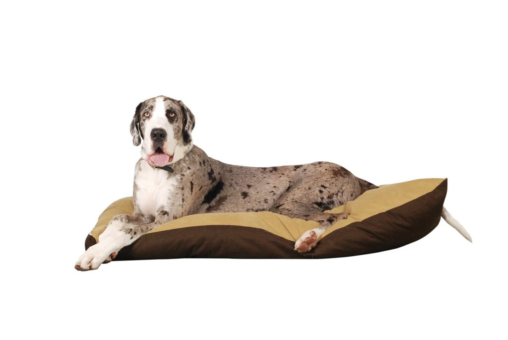 Great Dane Dog Breed - Complete Profile, History, and Care. https://petspalo.com