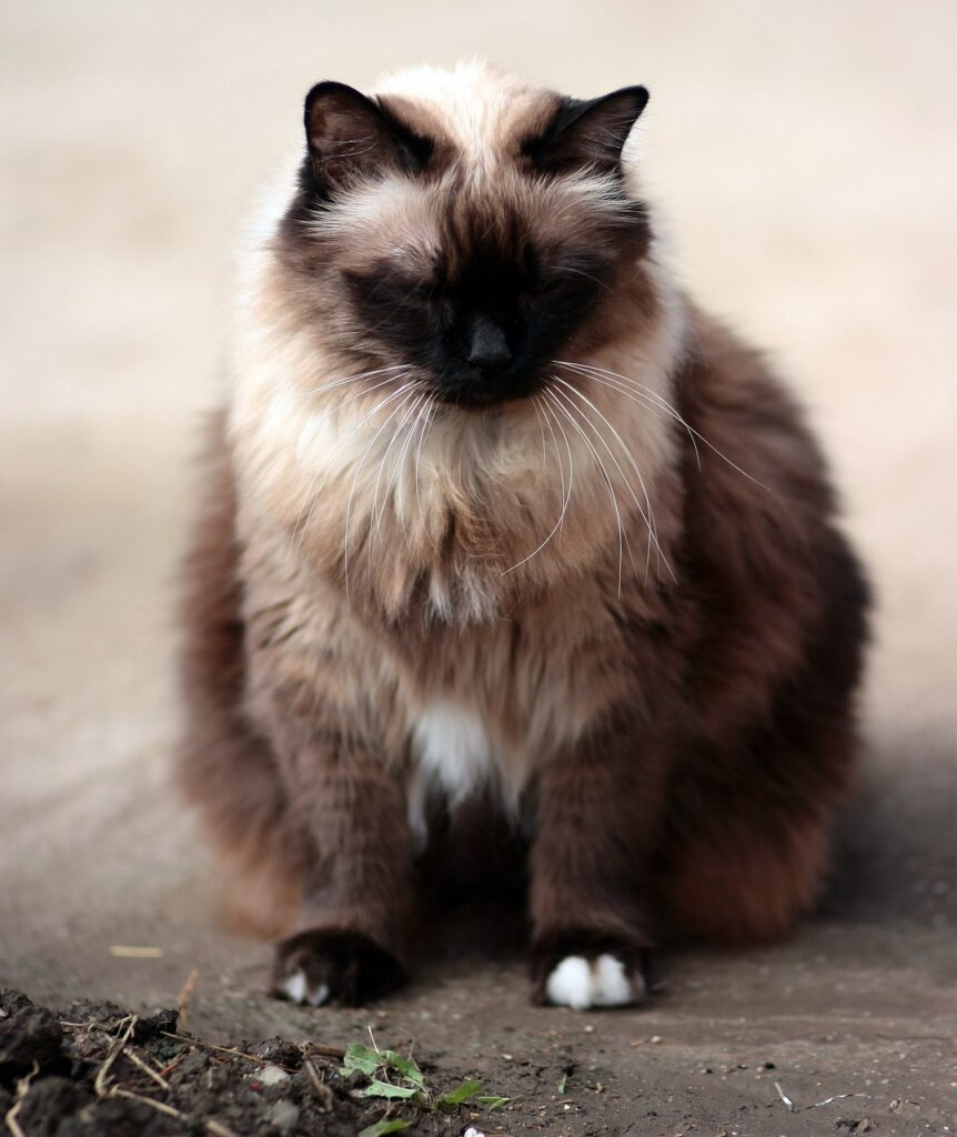 5 Cutest cat breeds perfect for adoption. httpswww.petspalo.com