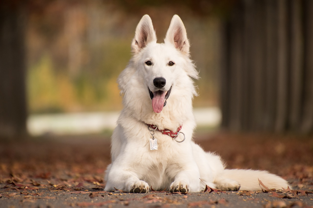 Most Popular Dog Breeds in the World (2020). https://petspalo.com