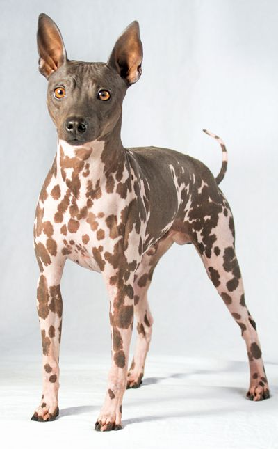 10 Adorable Hypoallergenic Dogs That Don't Shed. https://petspalo.com/