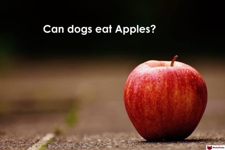 10 Best Fruits for Your Dogs. https://petspalo.com/