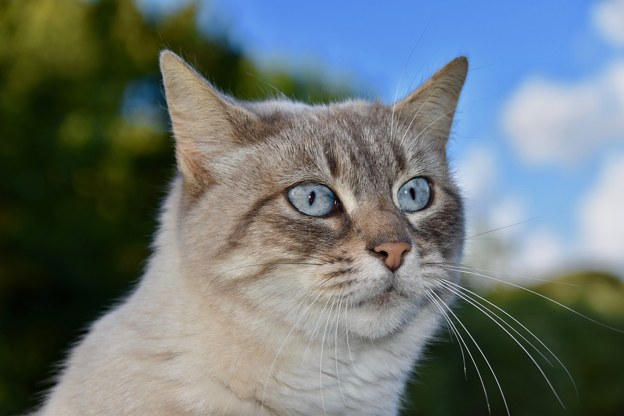 European Shorthair Cat Breed – Complete Profile, History, and Care. https://petspalo.com/