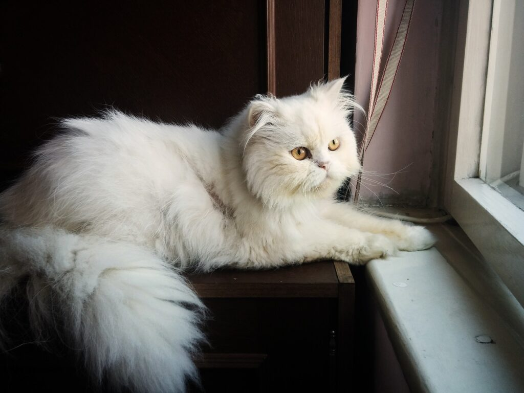 Persian Cat Breed – Complete Profile, History, and Care. https://petspalo.com/