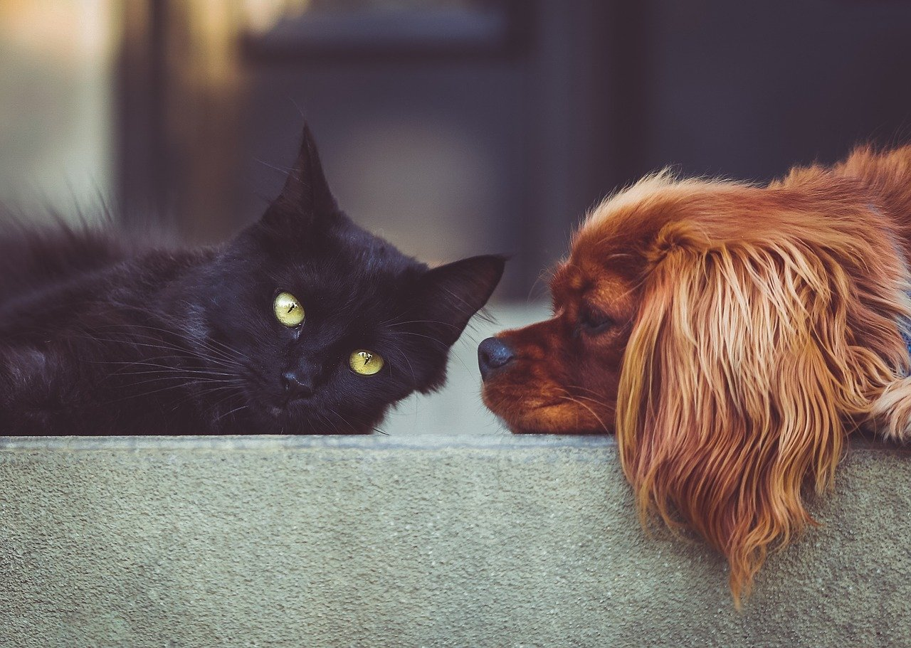 10 Best dogs for Families with Cats. https://petspalo.com/