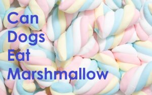 Can Dogs Eat Marshmallow